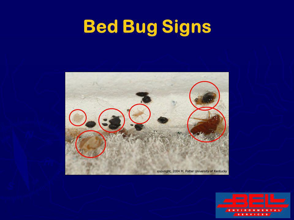 Bed Bug Signs 29
