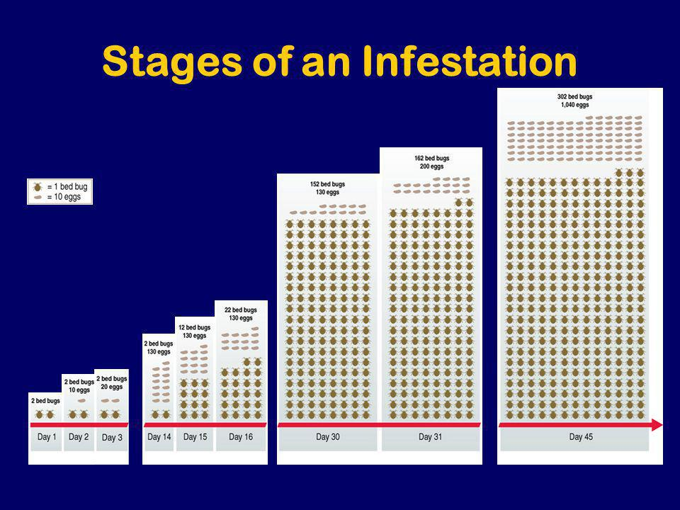 Stages of an Infestation