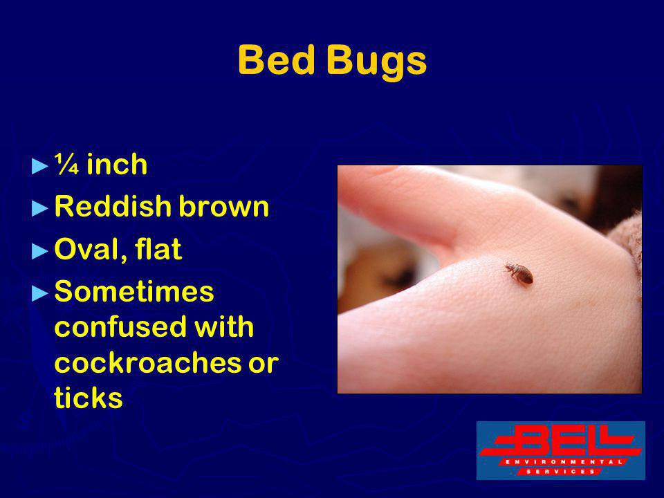 Bed Bugs ¼ inch Reddish brown Oval, flat