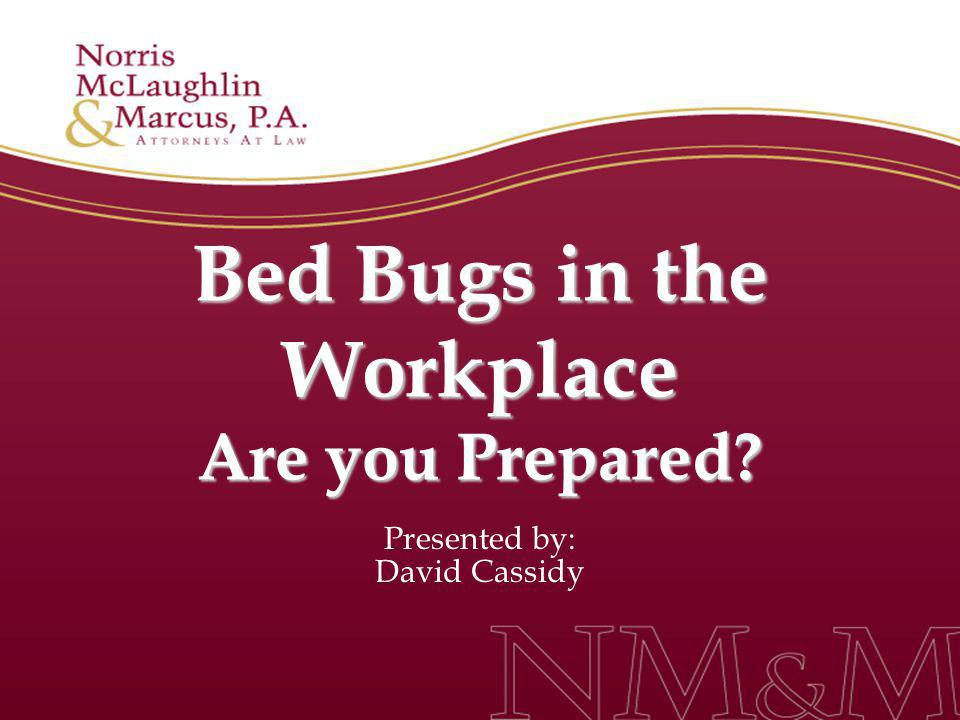 Bed Bugs in the Workplace Are you Prepared