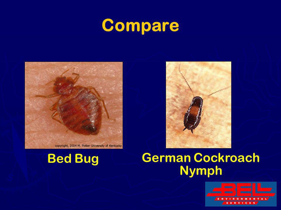 Compare Bed Bug German Cockroach Nymph 8
