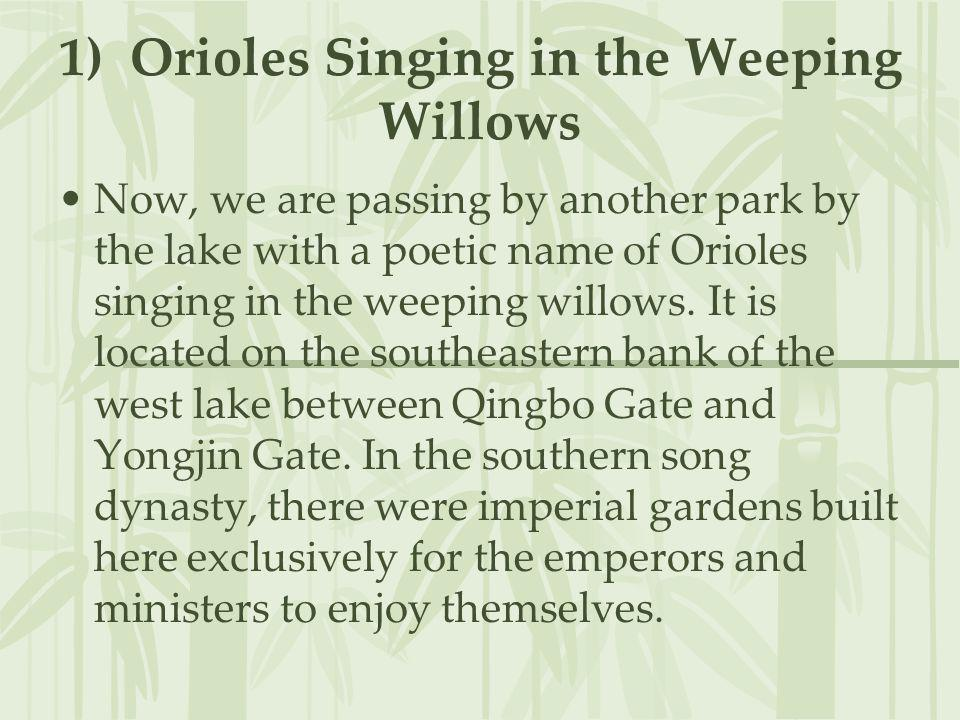 1) Orioles Singing in the Weeping Willows