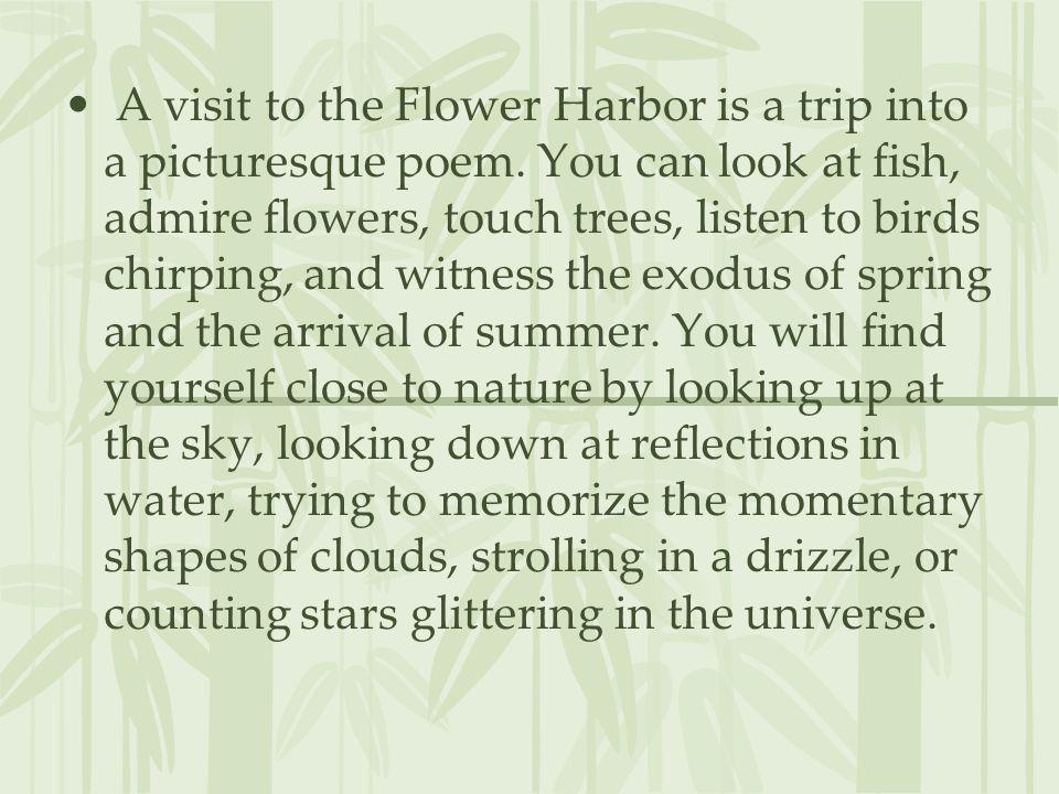 A visit to the Flower Harbor is a trip into a picturesque poem