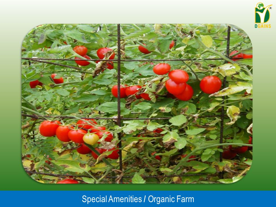 Special Amenities / Organic Farm