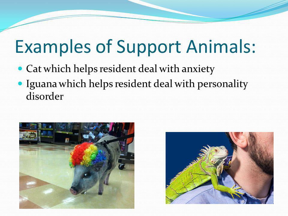 Examples of Support Animals: