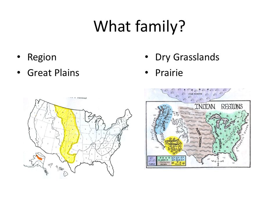 What family Region Great Plains Dry Grasslands Prairie