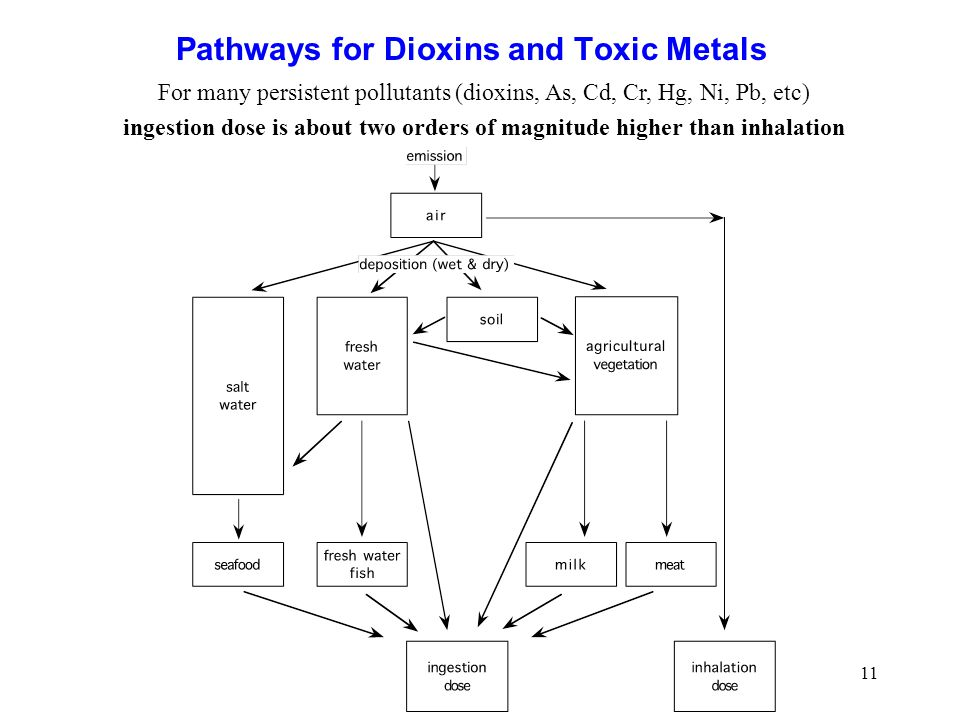 Pathways for Dioxins and Toxic Metals