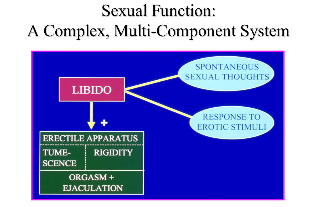 Sexual Function: A Complex, Multi-Component System
