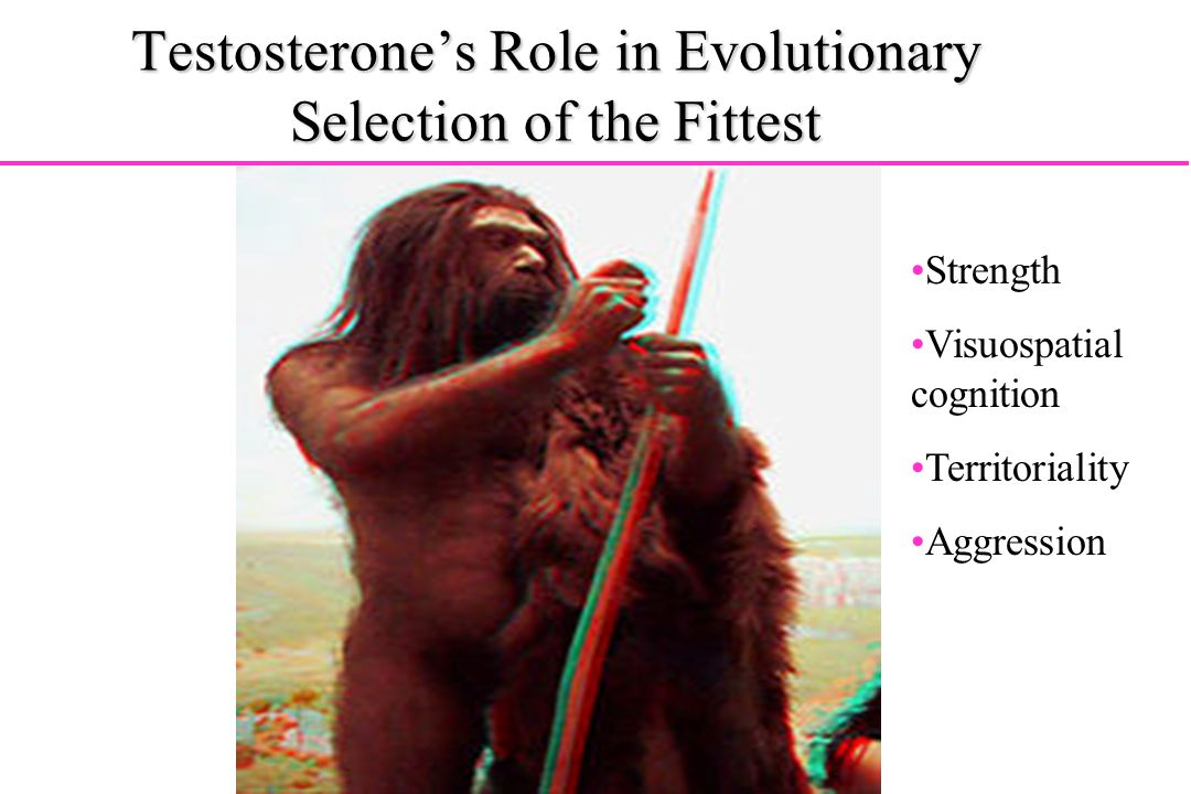 Testosterone's Role in Evolutionary Selection of the Fittest