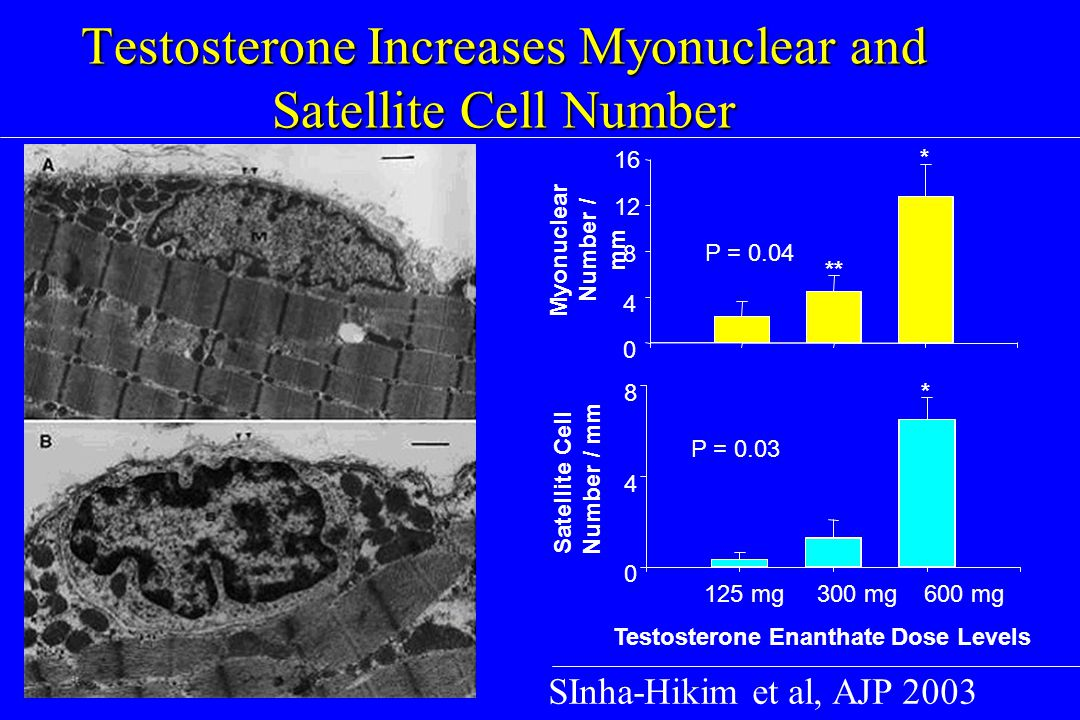 Testosterone Increases Myonuclear and Satellite Cell Number