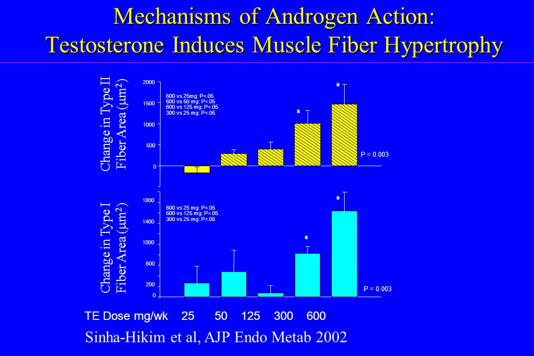 Mechanisms of Androgen Action: Testosterone Induces Muscle Fiber Hypertrophy