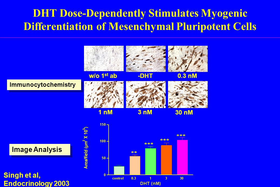 DHT Dose-Dependently Stimulates Myogenic Differentiation of Mesenchymal Pluripotent Cells