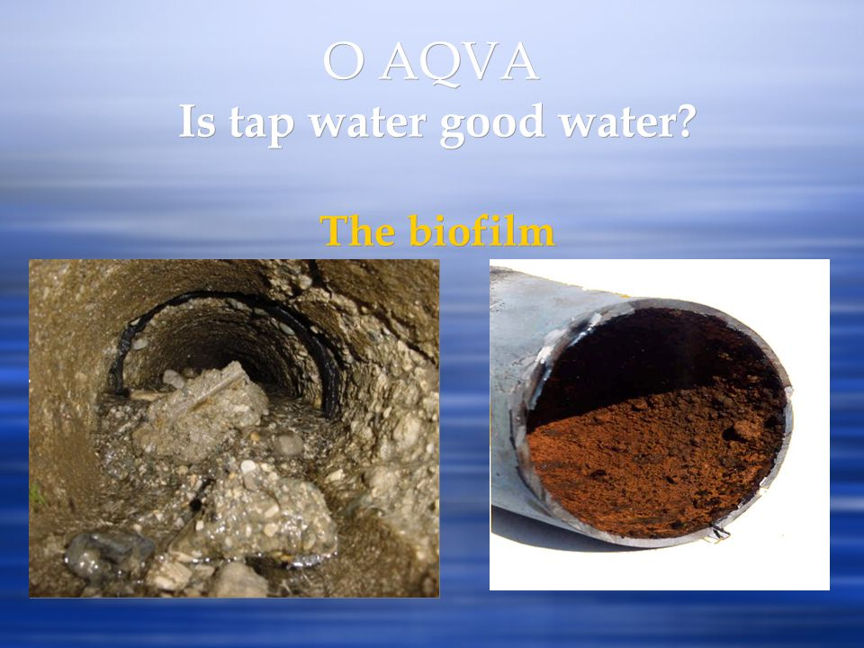 O AQVA Is tap water good water The biofilm