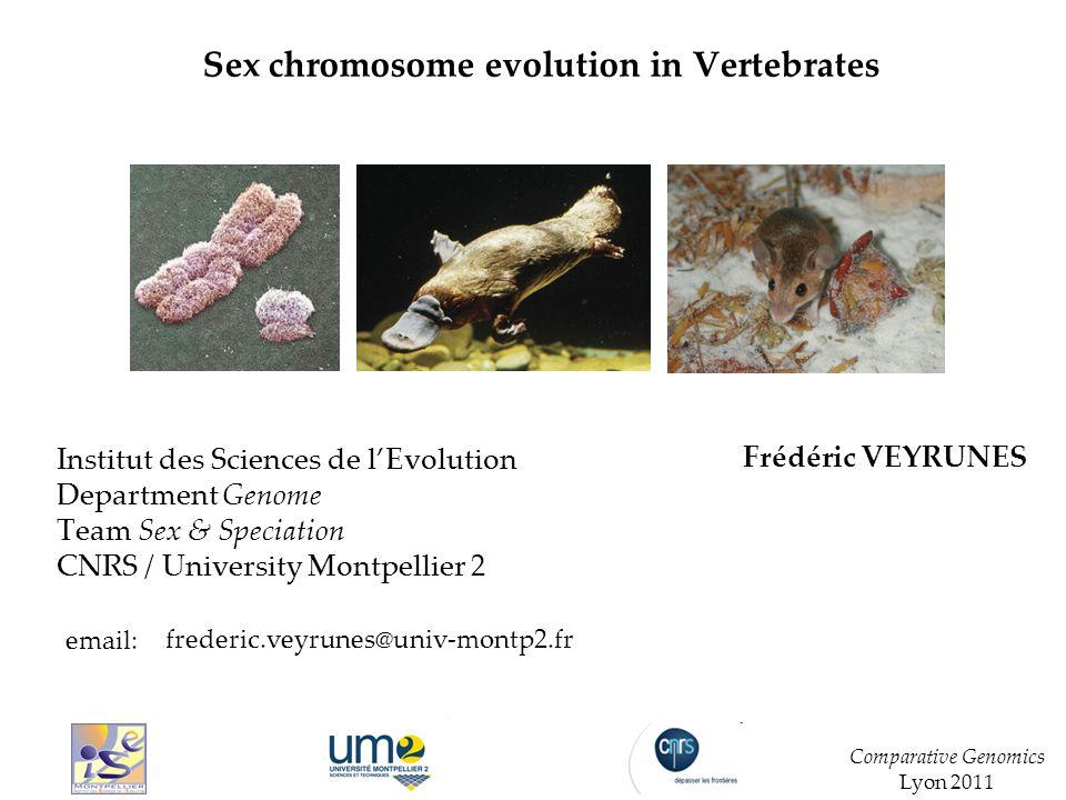 Sex chromosome evolution in Vertebrates