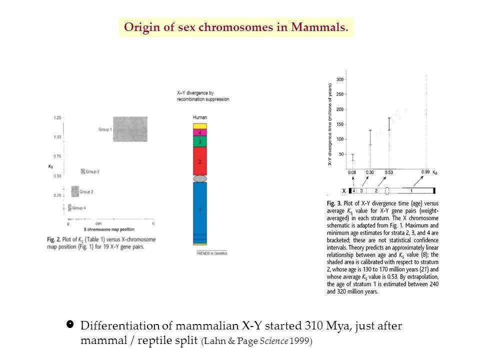 Origin of sex chromosomes in Mammals.