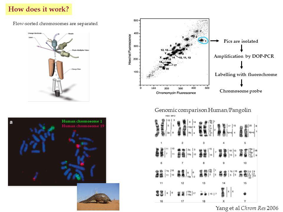 Genomic comparison Human/Pangolin