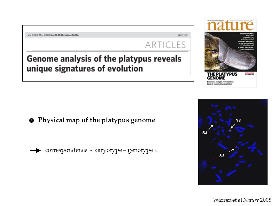 Physical map of the platypus genome