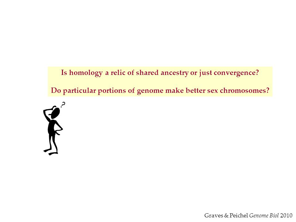 Is homology a relic of shared ancestry or just convergence