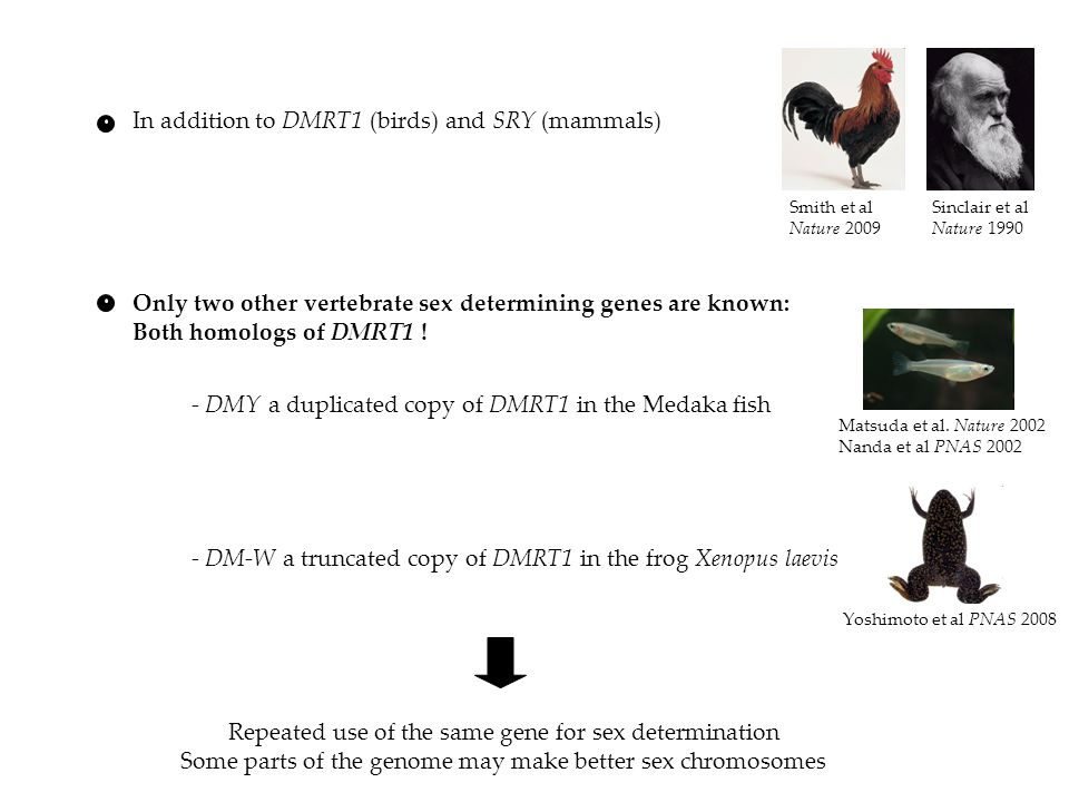 In addition to DMRT1 (birds) and SRY (mammals)