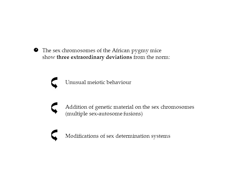 The sex chromosomes of the African pygmy mice