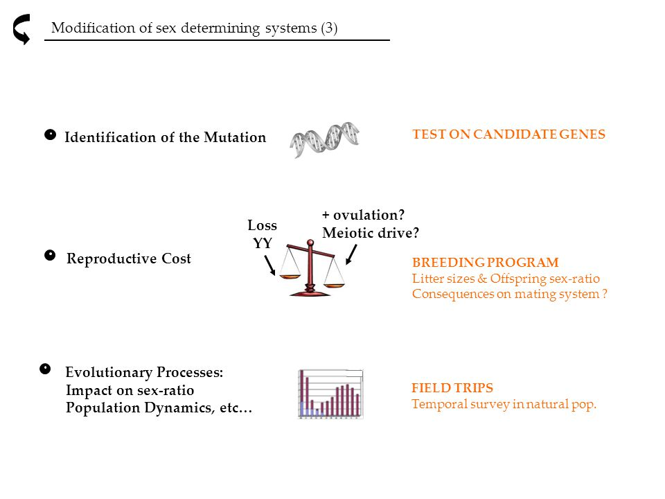 Modification of sex determining systems (3)