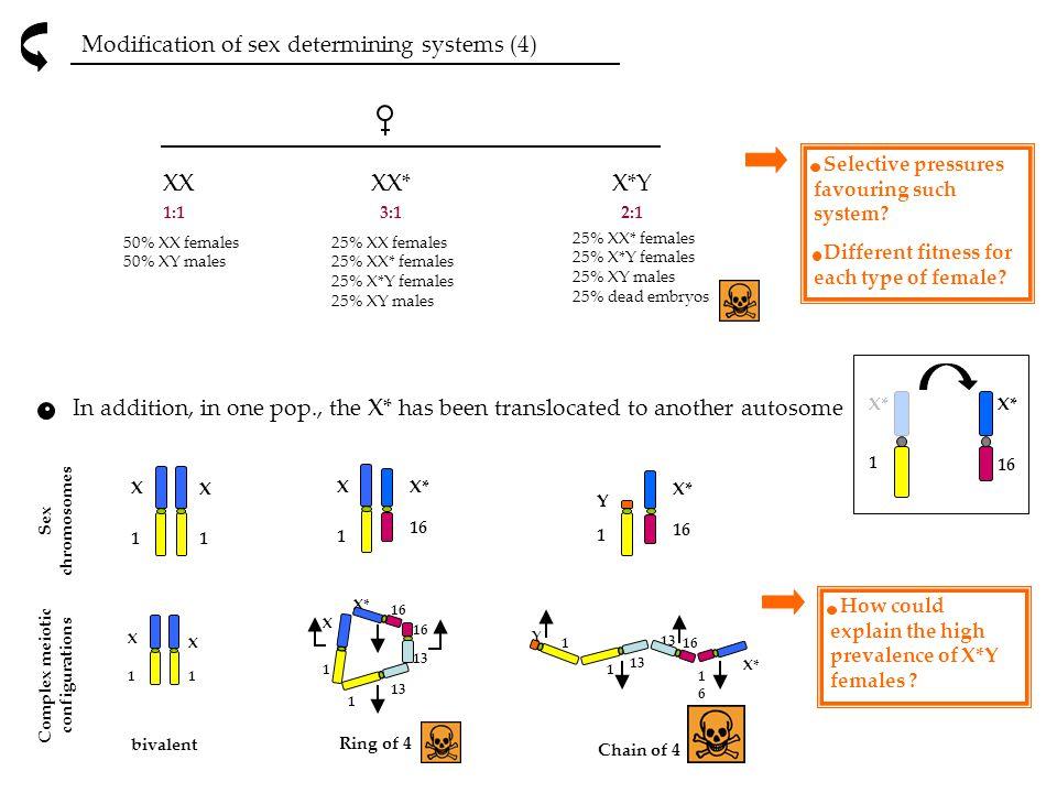 Complex meiotic configurations