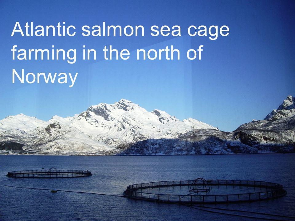 Atlantic salmon sea cage farming in the north of Norway