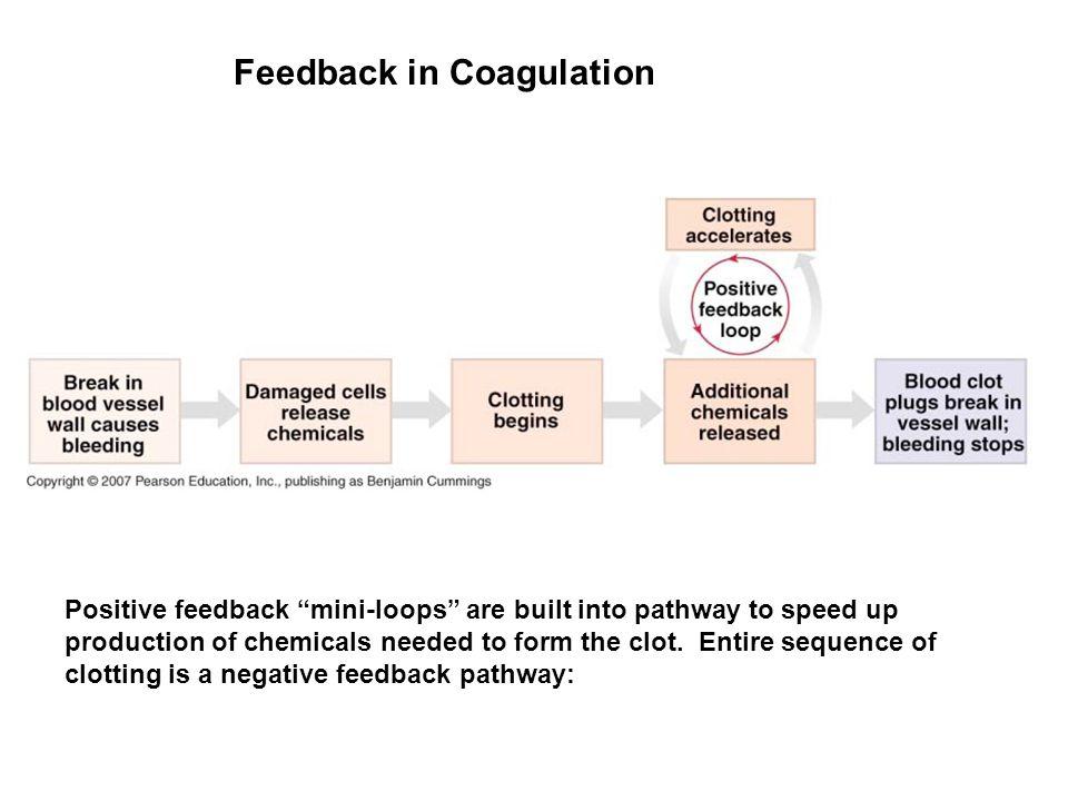 Feedback in Coagulation