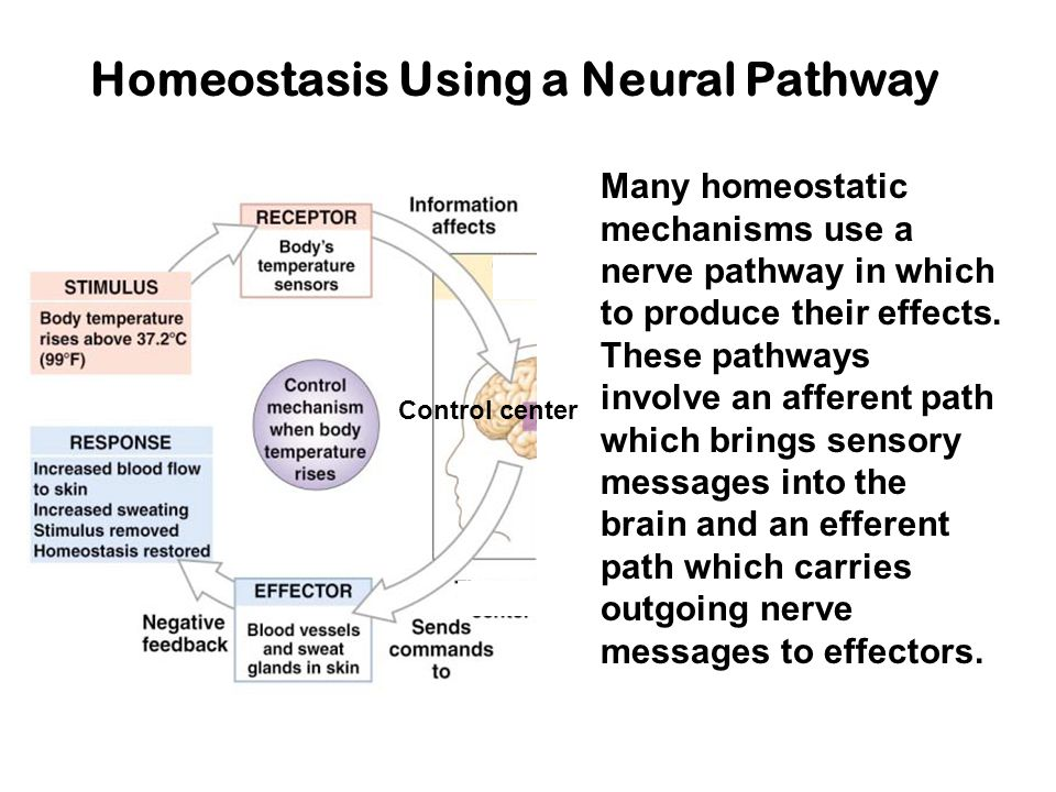 Homeostasis Using a Neural Pathway