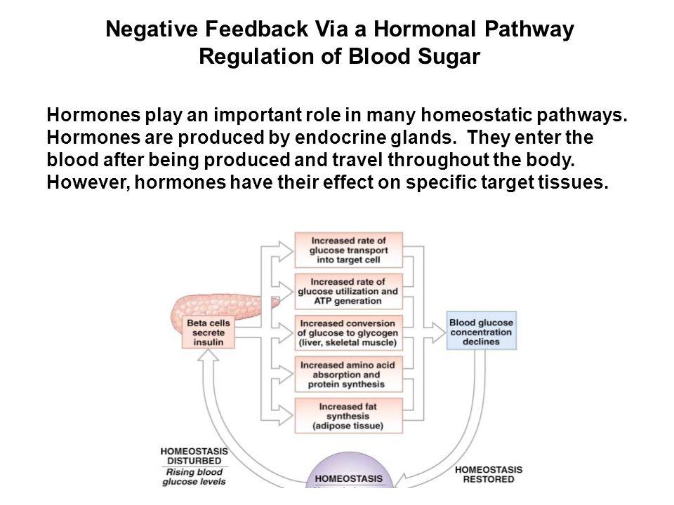 Negative Feedback Via a Hormonal Pathway Regulation of Blood Sugar