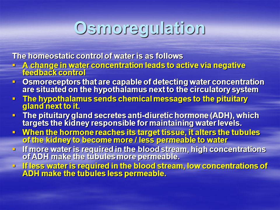 Osmoregulation The homeostatic control of water is as follows