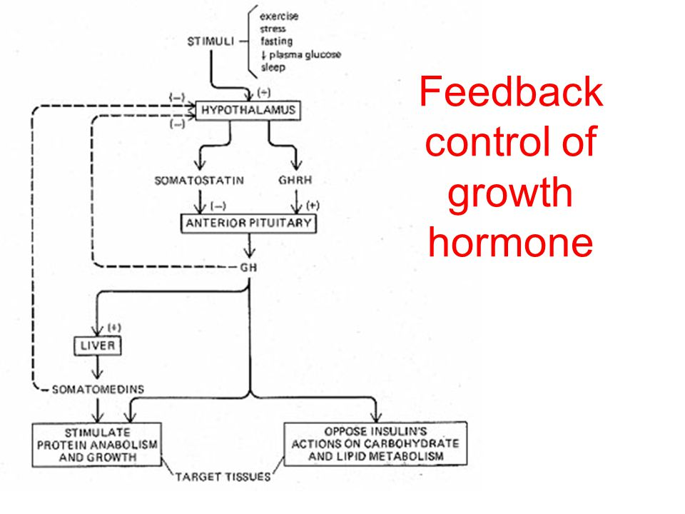Feedback control of growth hormone