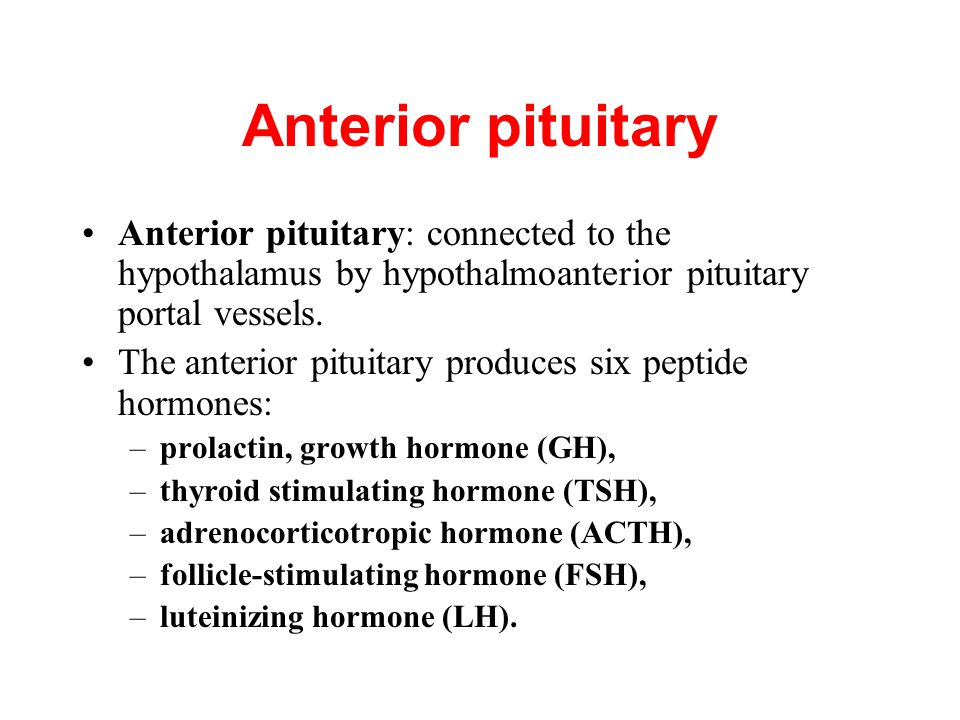 Anterior pituitary Anterior pituitary: connected to the hypothalamus by hypothalmoanterior pituitary portal vessels.