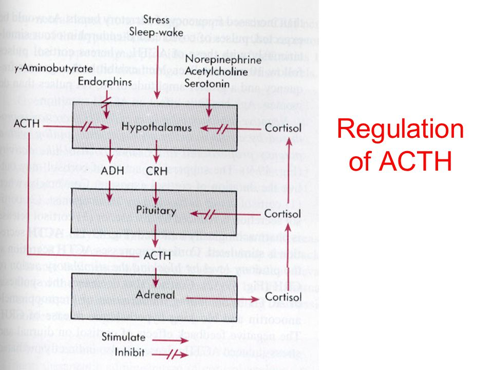 Regulation of ACTH