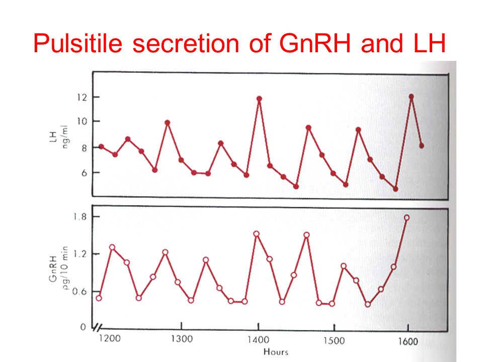 Pulsitile secretion of GnRH and LH