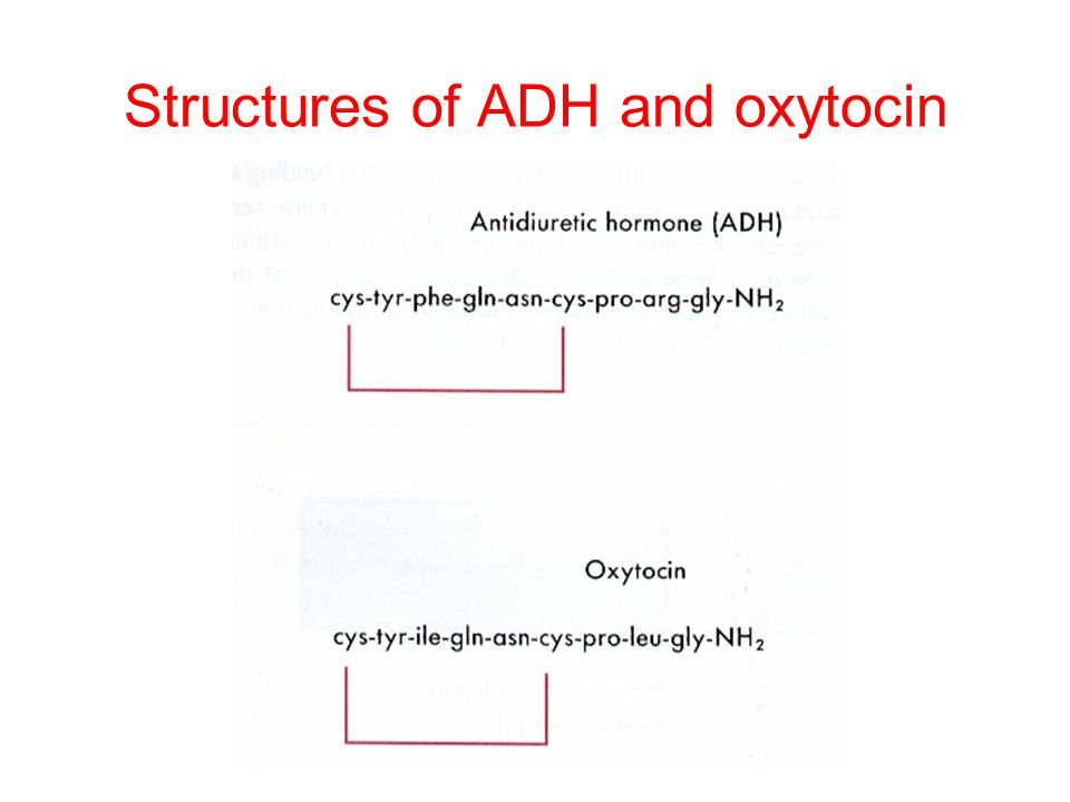 Structures of ADH and oxytocin
