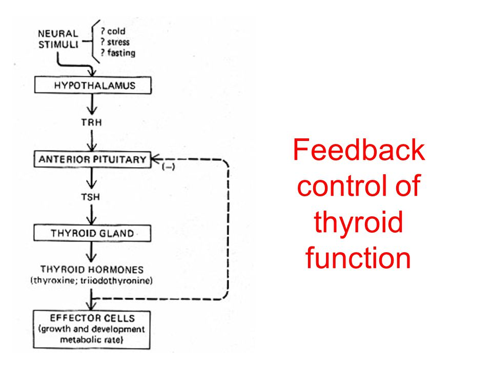 Feedback control of thyroid function