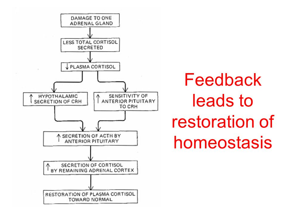 Feedback leads to restoration of homeostasis