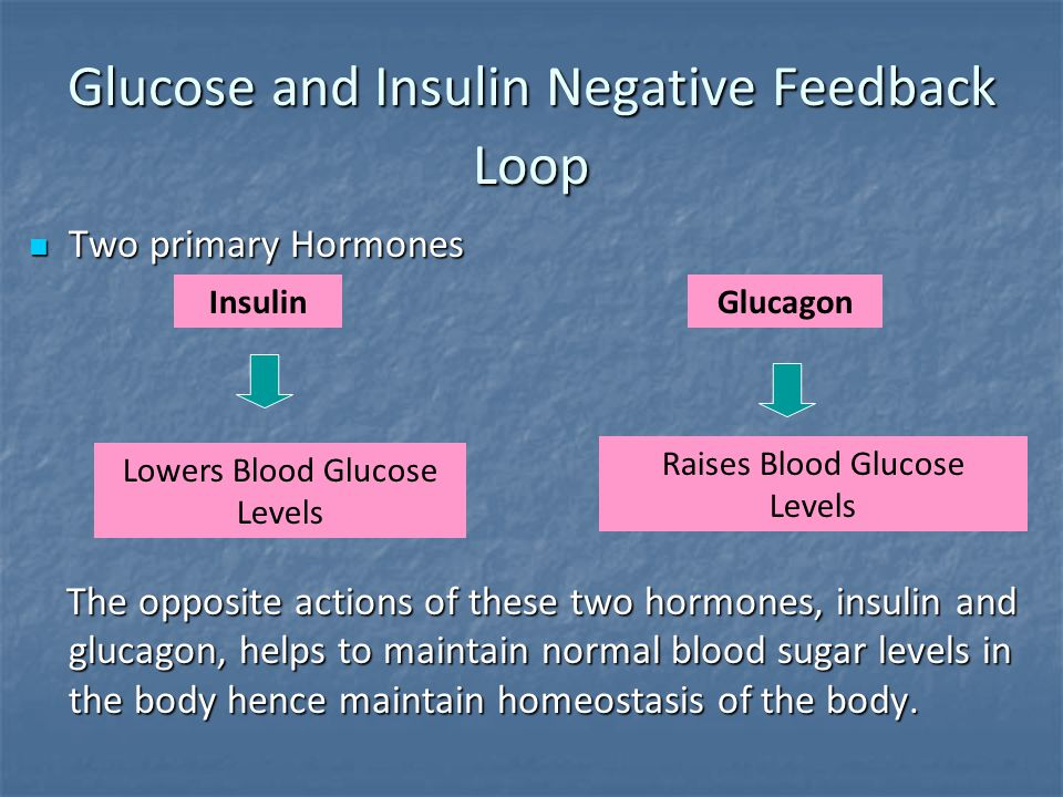Glucose and Insulin Negative Feedback Loop
