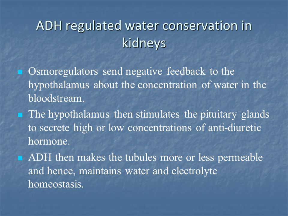 ADH regulated water conservation in kidneys