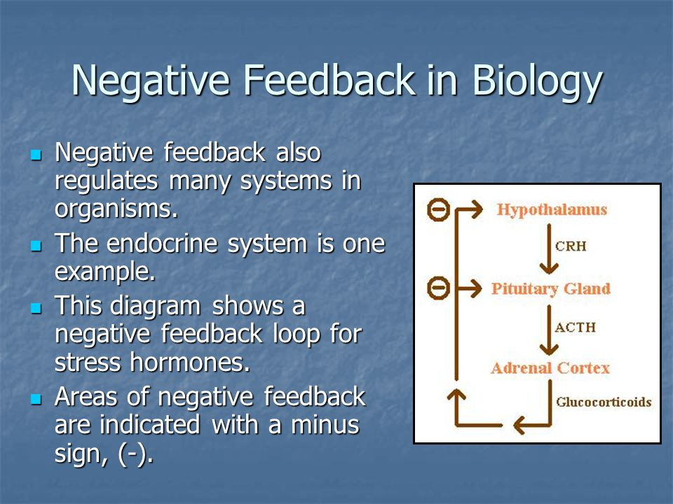 Negative Feedback in Biology