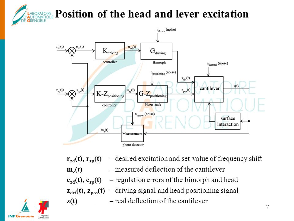 Position of the head and lever excitation