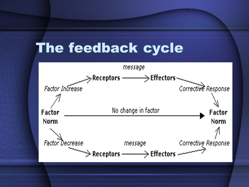 The feedback cycle