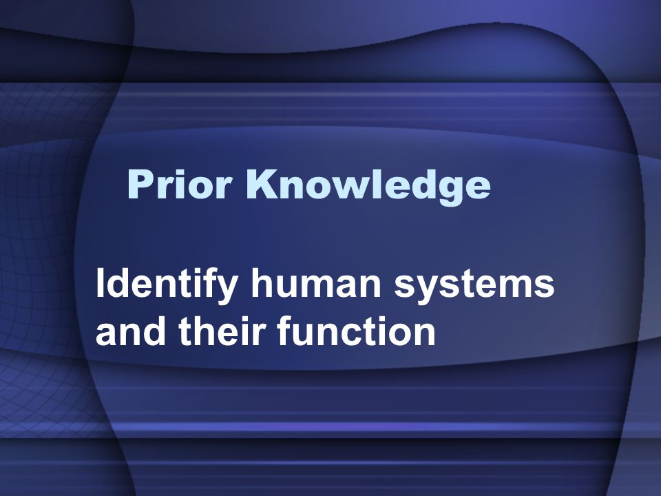 Identify human systems and their function