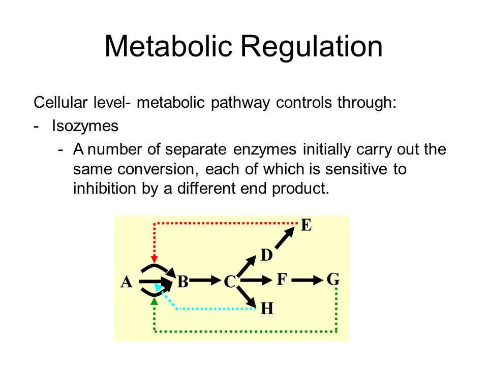 Metabolic Regulation Cellular level- metabolic pathway controls through: Isozymes.