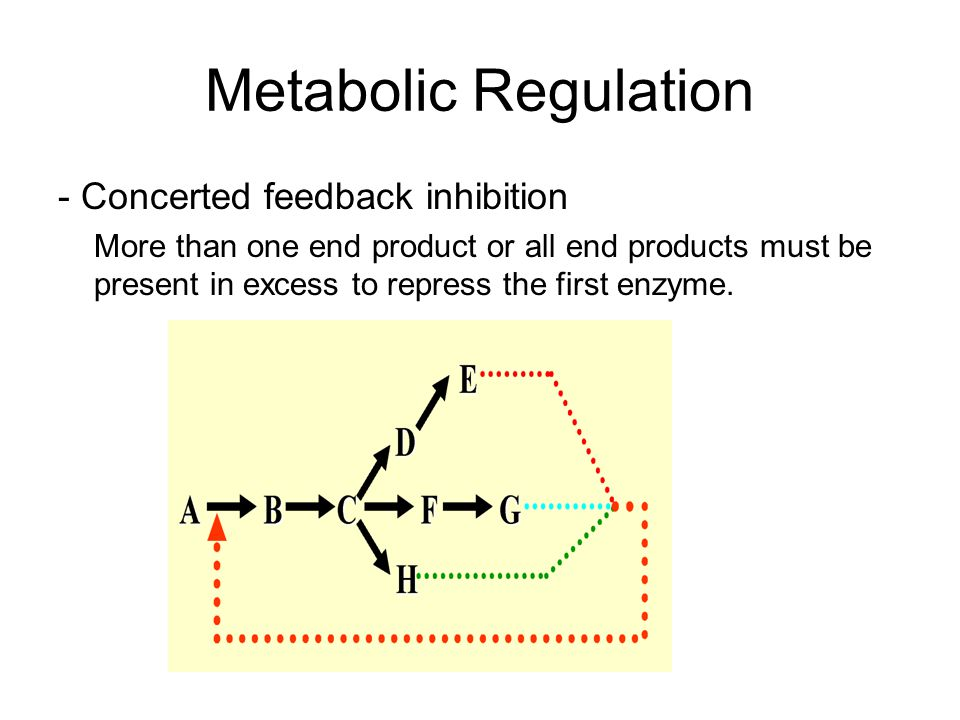 Metabolic Regulation - Concerted feedback inhibition