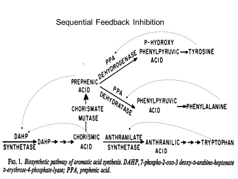 Sequential Feedback Inhibition