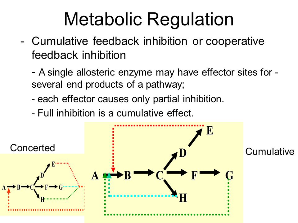 Metabolic Regulation - Cumulative feedback inhibition or cooperative feedback inhibition.