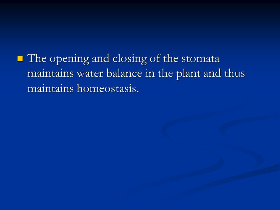 The opening and closing of the stomata maintains water balance in the plant and thus maintains homeostasis.