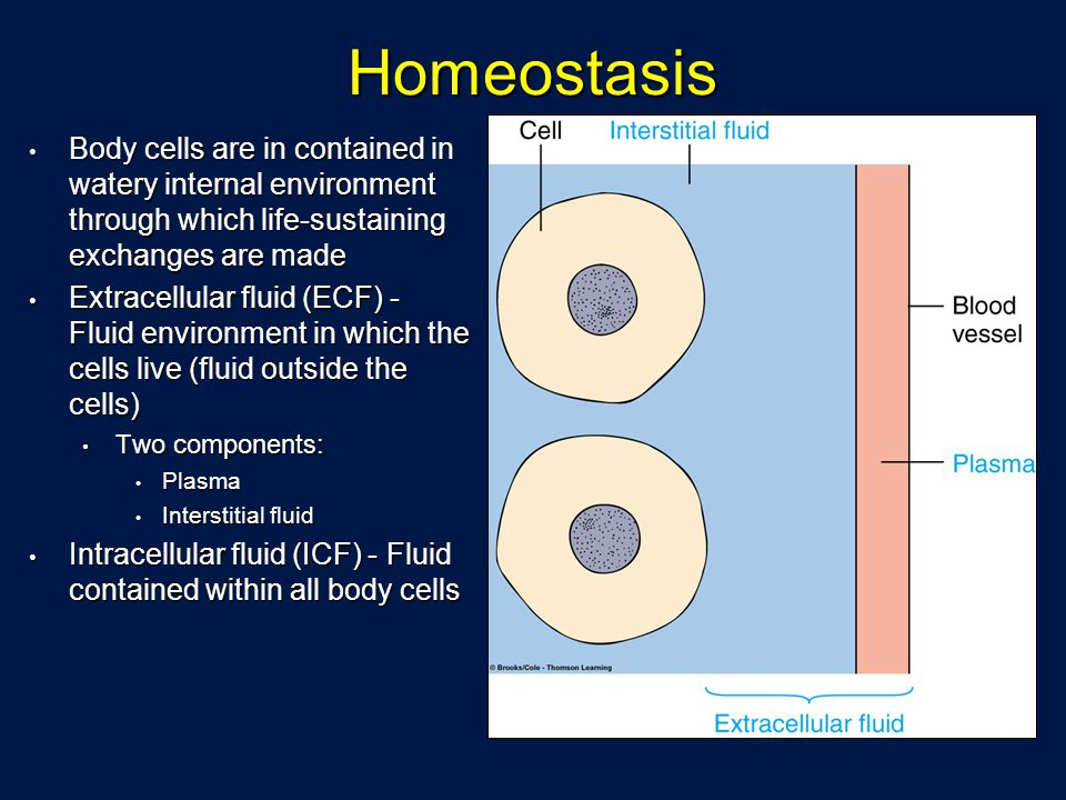 Homeostasis Body cells are in contained in watery internal environment through which life-sustaining exchanges are made.